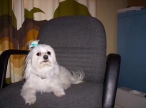 This is my Main Man - the MalteseTerrorist!
