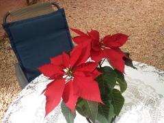 The Christmas Plant.