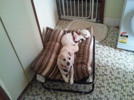 Likes a nice bed!