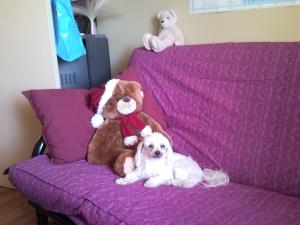 A Man and his  Teddy Bear