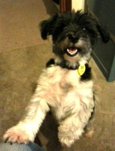 Yogi - Our friend's dog