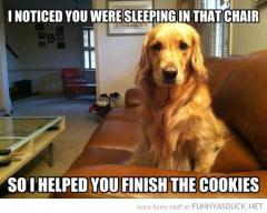 Dogs are considerate and helpful like that!