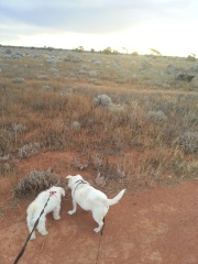 Out in the bush
