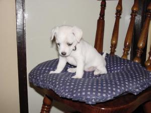 Chienne  when the world was very young,.