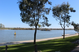 The Ferry at Tailem Bend