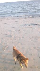 Benji, sand and sea