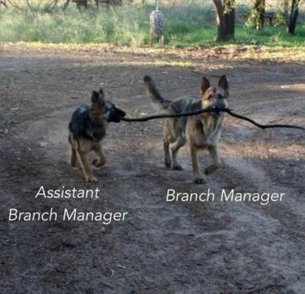 Dog Management