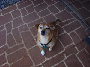 Benji on the driveway