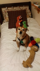 A dog and his toys