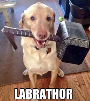 labrathor-dog-meme