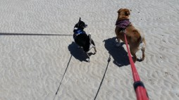 Benji and the WaWa at the beach