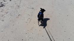 The WaWa at the Beach